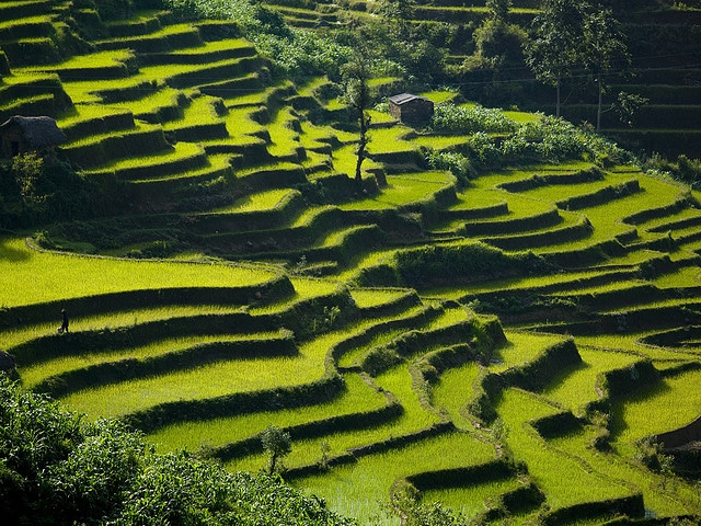 The terraces of Yunnan. China