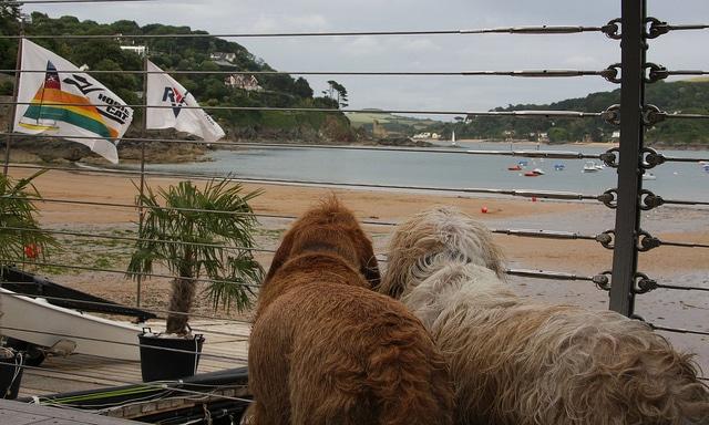 Dogs enjoying their holidays