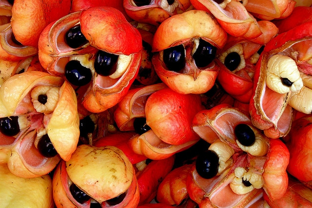 Fresh ackee in Jamaica