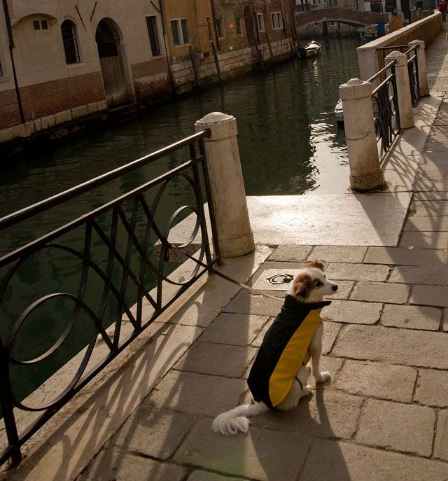 With my dog in Venice