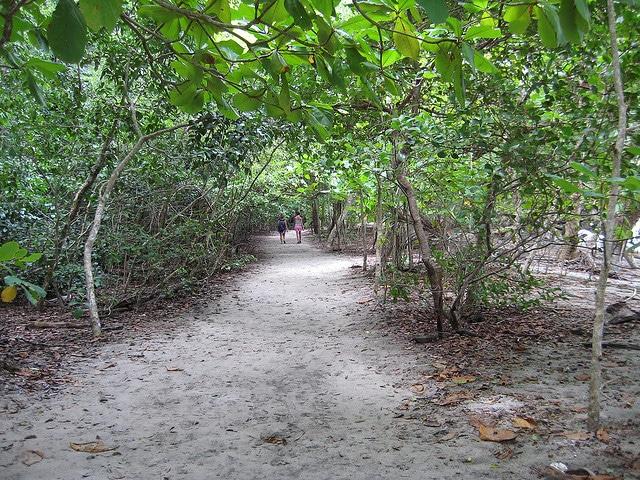 The Path of Antonio's National Park