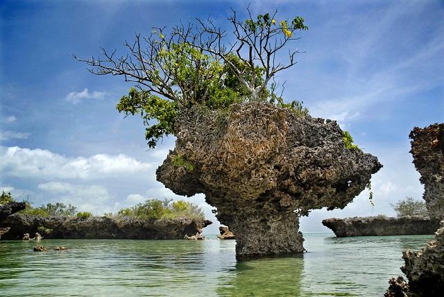 Zanzibar Coral Bay