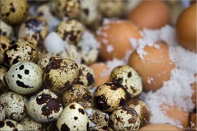 Hundred-Year-Old Eggs