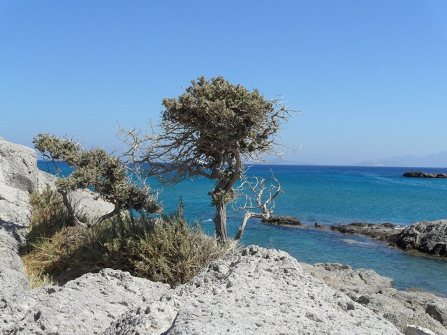 A small tree on the rocks