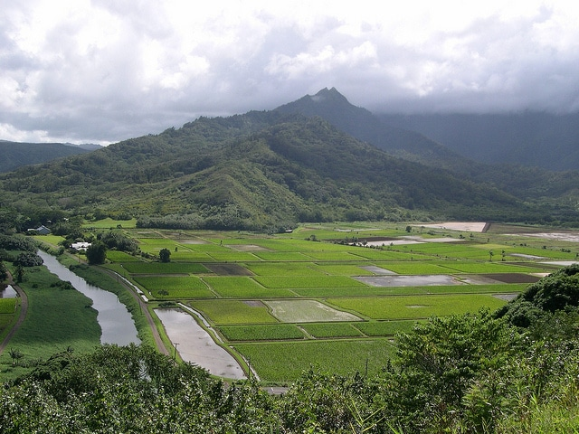 NASS Hawaii Ag Blog - Taro Fields Pic