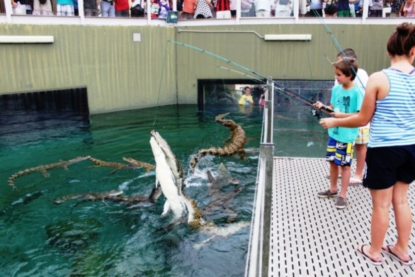 Kids feeding the Crocs