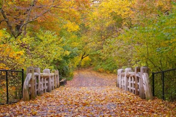 Prospect Park Little Bridge