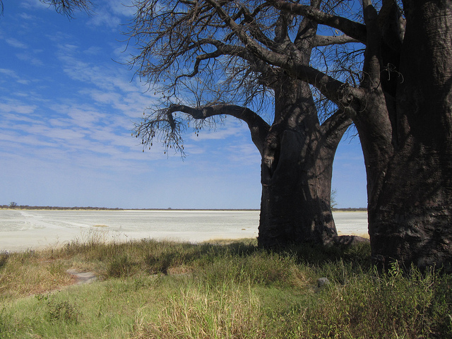 Baines Baobabs Trip