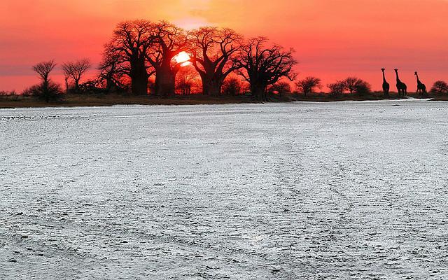 Baines Baobabs sunrise