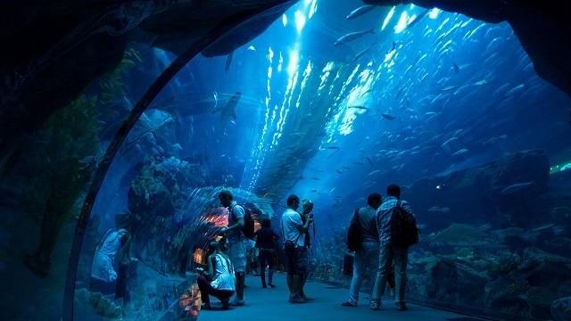 The largest aquarium in the world In Dubai