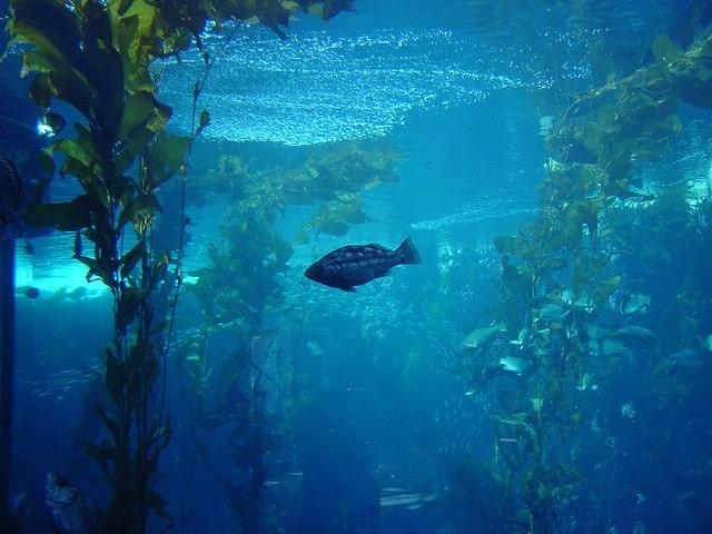 Visit The Non Profit Monterey Bay Aquarium In California