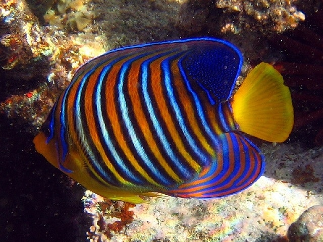 A clown fish on the reef
