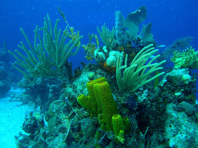 Coral hillock with gorgonians and sponges