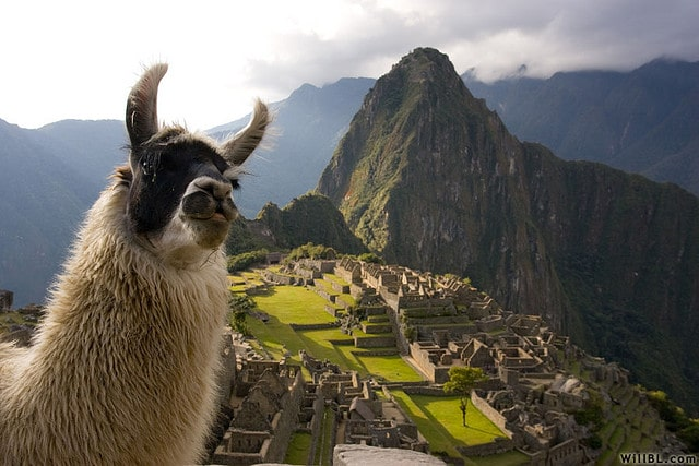 This llama got to Machu Picchu before you