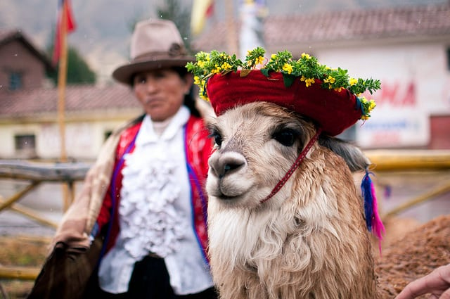This llama is ready to attend your party