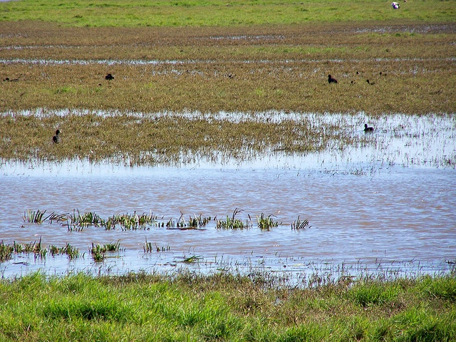 The marsh in Doñana
