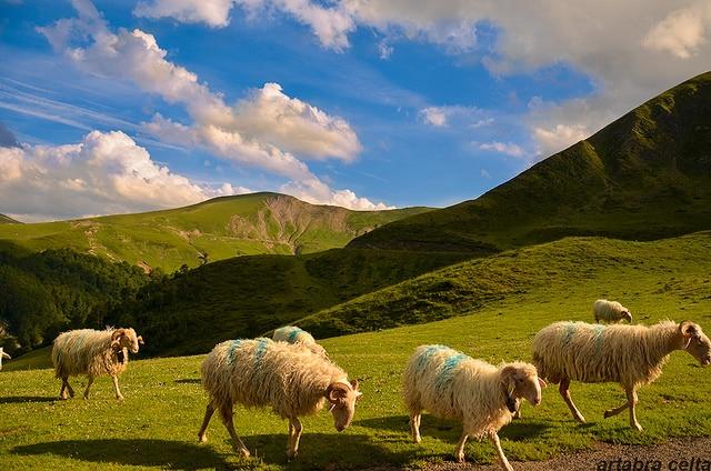 The shepherd life