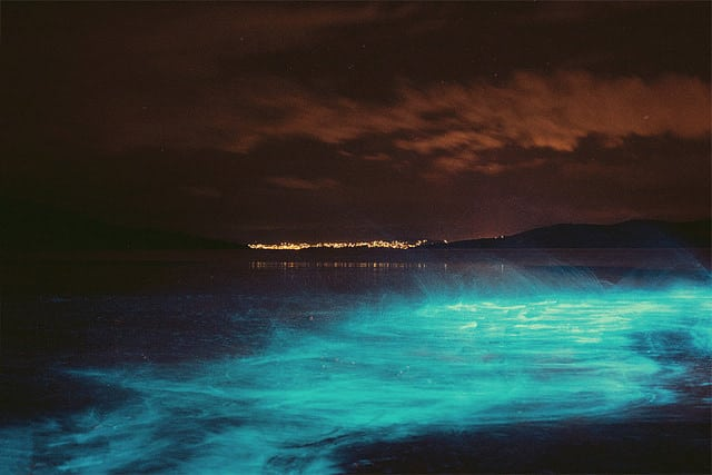 Bioluminescence splash in Hobart