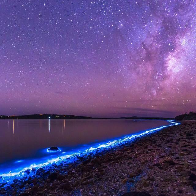 Bioluminescent phytoplankton, Australia