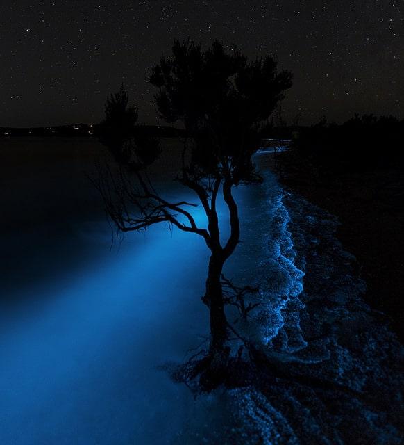 Neon tree, Tasmania