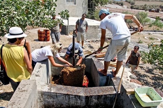 Santorini Wine Yards