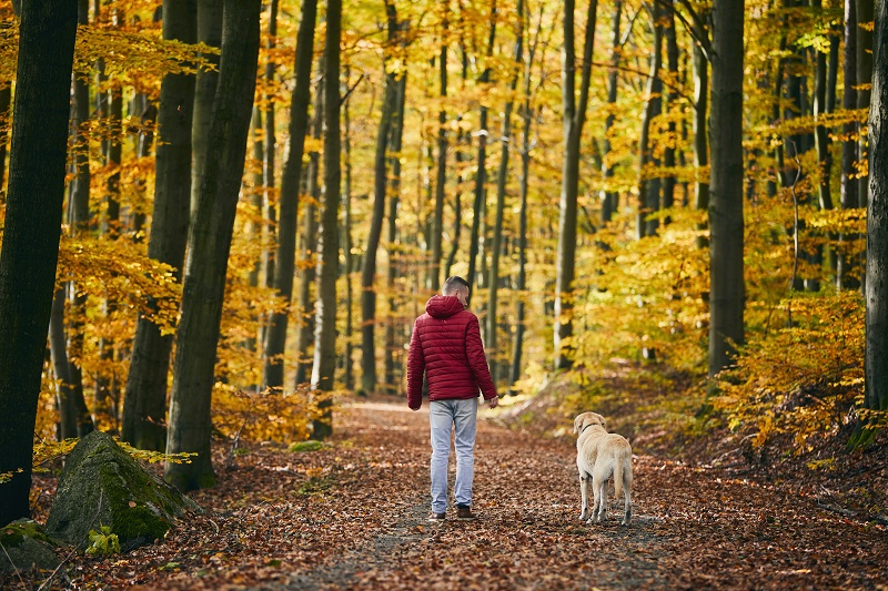 Rear view of man with dog in autumn nature