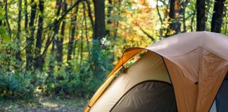 closeup of one tent in woods with early morning light shining th