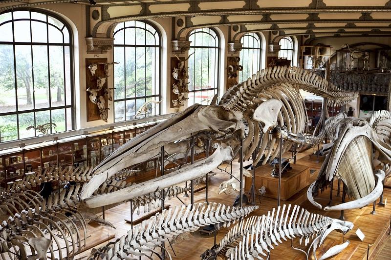 Ethnology Museum in Paris